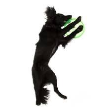 Флайбит фризби за кучета